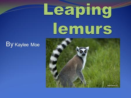 By Kaylee Moe Introducing the Lemur Did you know that the lemurs name was derived from the Latin word lemur which means haunter? There are about 100.