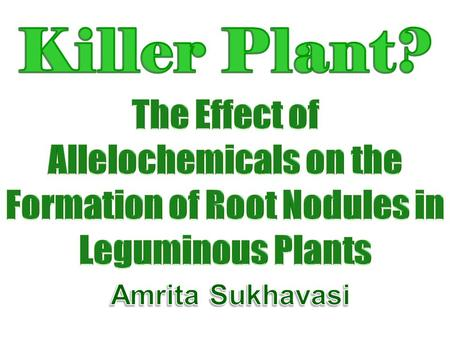 Killer Plant? The Effect of Allelochemicals on the Formation of Root Nodules in Leguminous Plants Amrita Sukhavasi.