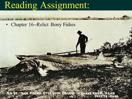Reading Assignment: Chapter 16--Relict Bony Fishes end.