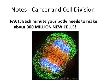 Notes - Cancer and Cell Division FACT: Each minute your body needs to make about 300 MILLION NEW CELLS!