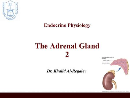 Endocrine Physiology The Adrenal Gland 2 Dr. Khalid Al-Regaiey.
