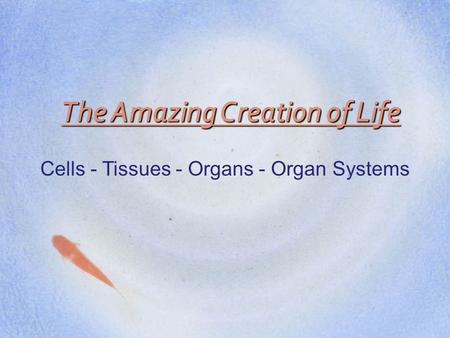 The Amazing Creation of Life Cells - Tissues - Organs - Organ Systems.