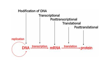 Transcriptional - These mechanisms prevent transcription. Posttranscriptional - These mechanisms control or regulate mRNA after it has been produced.
