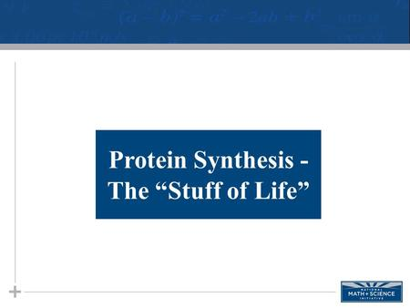 "Protein Synthesis - The ""Stuff of Life"". 2 Proteins Proteins are the ""workhorse"" molecule found in organisms. The blue print for proteins is coded in."