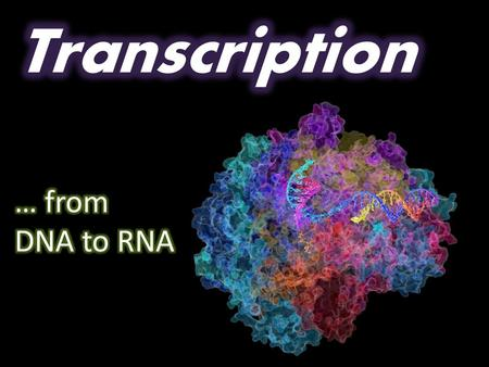 Transcription … from DNA to RNA.