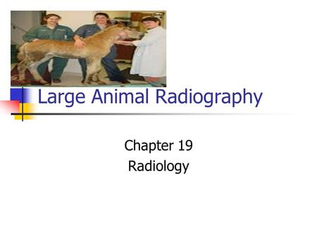 Large Animal Radiography Chapter 19 Radiology. Introduction Large animal radiography requires patience and time. Radiography of large animals must be.