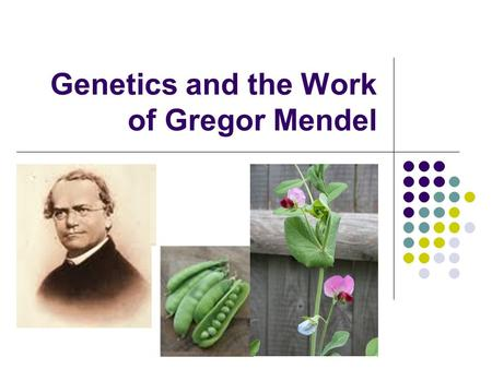 Genetics and the Work of Gregor Mendel