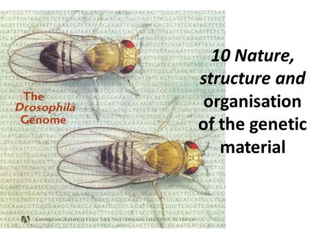10 Nature, structure and organisation of the genetic material.