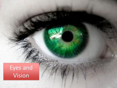 Eyes and Vision. Review: List ways vision helps us.