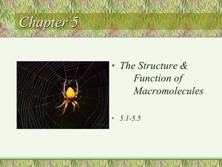 Chapter 5 The Structure & Function of Macromolecules 5.1-5.5.