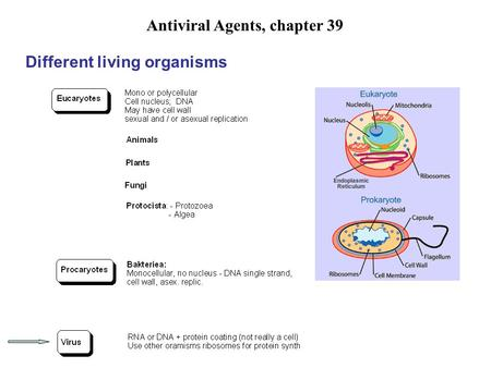 Antiviral Agents, chapter 39 Different living organisms.