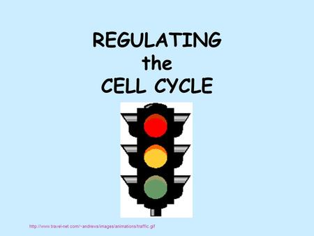 REGULATING the CELL CYCLE