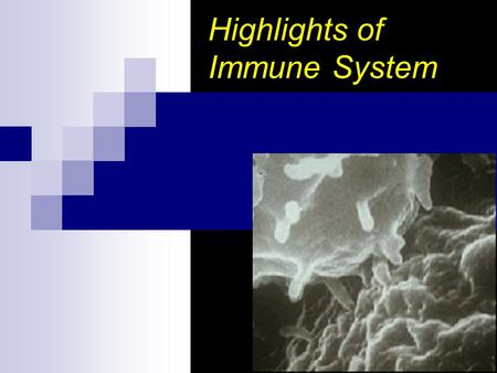 Highlights of Immune System. Topic Outline Overview of the Immune System 1 st and 2 nd lines of Defense The Immune System  B cells  The antibody & antibody.