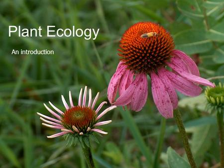 Plant Ecology An introduction. Ecology as a Science  Study of the relationships between living organisms and their environment  Of the interactions.