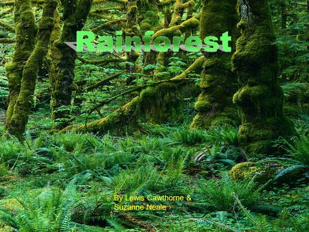 By Lewis Cawthorne & Suzanne Neale. Contents Where are the rainforests 3 Animals 4 Plants 5 Layers 6.