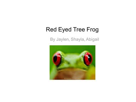 Red Eyed Tree Frog By Jaylen, Shayla, Abigail. Facts The red- eyed tree frog is green and has red eyes. They have blue and yellow stripes on their sides.