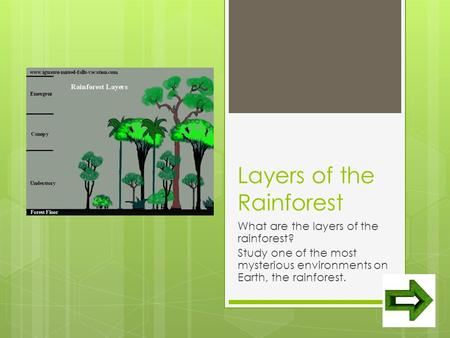 Layers of the Rainforest What are the layers of the rainforest? Study one of the most mysterious environments on Earth, the rainforest.