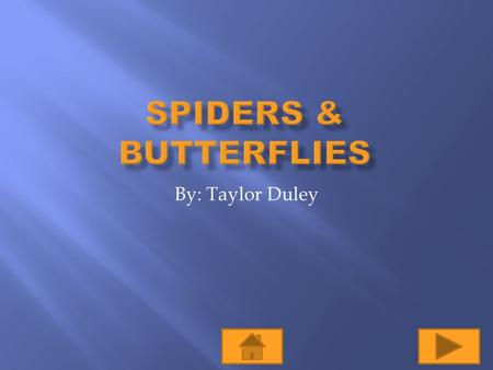 By: Taylor Duley  Objectives: Given the information about orb-web spiders, students will be able to define what an orb-web spider is, why they build.