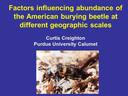Factors influencing abundance of the American burying beetle at different geographic scales Curtis Creighton Purdue University Calumet.