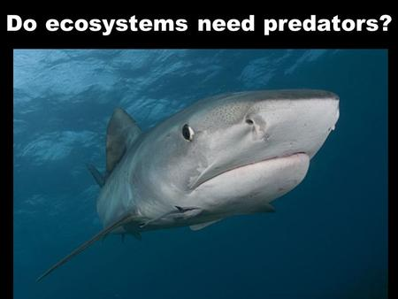 Do ecosystems need predators?. What role do sharks and other top predators play in the coral reef ecosystem?