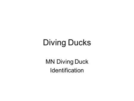 Diving Ducks MN Diving Duck Identification. Oldsquaw.