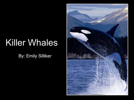 Killer Whales By: Emily Silliker. General Description The orca or killer whale is a toothed whale that is an efficient predator. Orcas live in small,