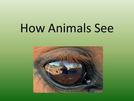 How Animals See. Not all animals see the world in the same way humans do. They can see different colours, amounts, and some can even see by other things.