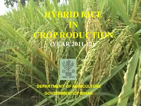 HYBRID RICE IN CROP RODUCTION (YEAR 2011-12) DEPARTMENT OF AGRICULTURE GOVERNMENT OF BIHAR.