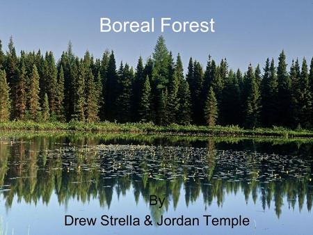 Boreal Forest By Drew Strella & Jordan Temple.