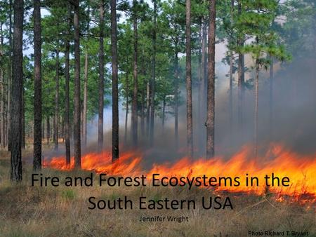 Fire and Forest Ecosystems in the South Eastern USA Jennifer Wright Photo Richard T. Bryant.