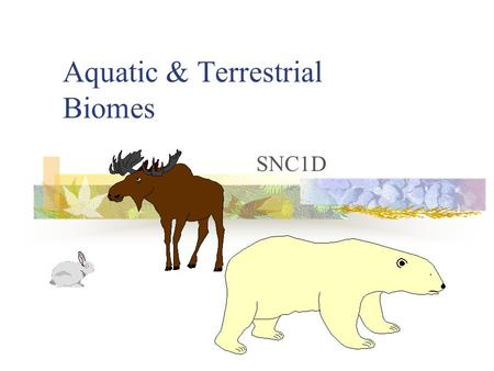 Aquatic & Terrestrial Biomes SNC1D. Biomes There are two major types of ecosystems: Aquatic Terrestrial Each can be subdivided further.