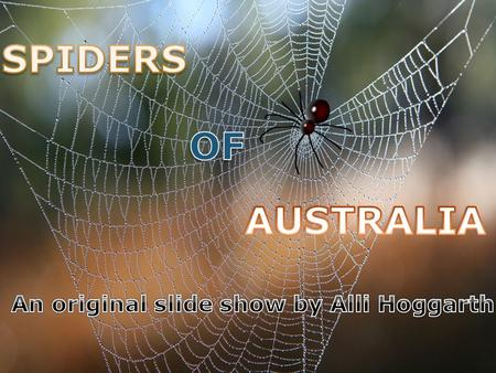 ◦ Did you know that there are over 1,500 different kinds of spiders in Australia!? ◦ The average person swallows on average three spiders a year!! ◦ There.