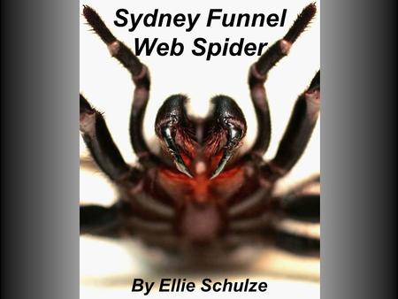 Sydney Funnel Web Spider By Ellie Schulze. Where it lives The Sydney funnel web spider lives in rainforest or shady damp areas found in the New South.