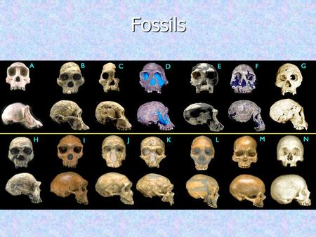 Fossils +/*0 /210.