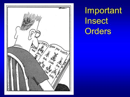 Important Insect Orders. Depending upon which textbook you use, there are 25-30 Insect Orders A few less common Orders are not listed A few more common.