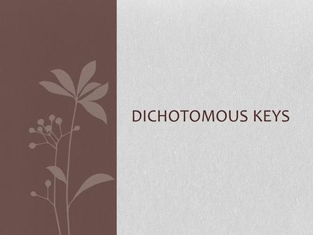 DICHOTOMOUS KEYS Introduction A dichotomous key is a tool that allows the user to determine the identity of items in the natural world, such as trees,