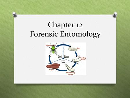 Chapter 12 Forensic Entomology. Case study – Bugs Don't Lie 1. When did the children go missing? 2. When were the bodies found? 3. List 5 reasons for.