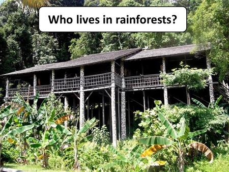 Who lives in rainforests?. Indigenous People of Borneo Objective: to understand the practices of the Dayak tribe people of Borneo. Your task: What do.
