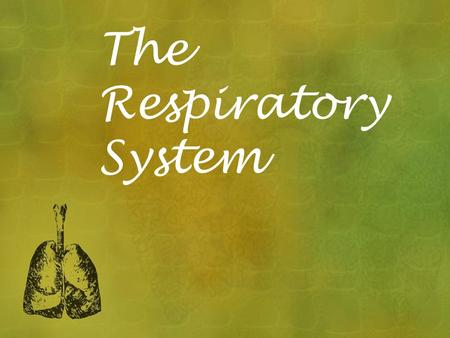 The Respiratory System. The system that provides oxygen for the body and allows carbon dioxide to leave the body This system works in close association.