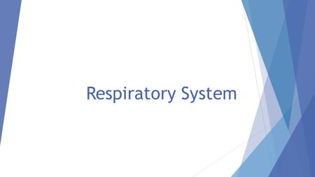 Respiratory System. Think Pair Share  Describe what happens when you breathe.