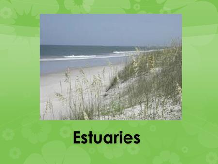 Estuaries Estuaries. Estuaries An estuary is defined as a partially enclosed coastal body of water, having an open connection with the ocean (for example,