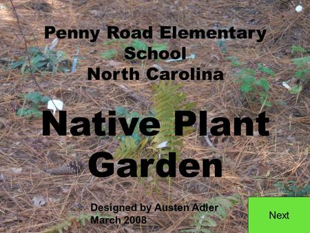 Penny Road Elementary School North Carolina Native Plant Garden Next Designed by Austen Adler March 2008.