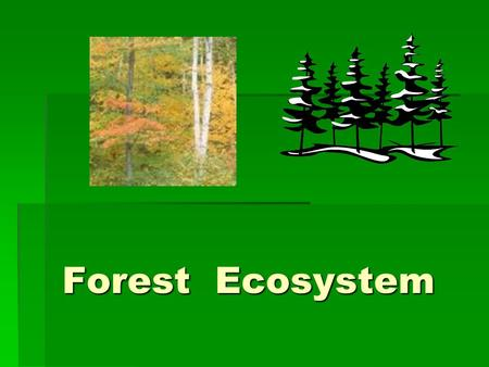 Forest Ecosystem Forest Ecosystem. Forests  Forests are large areas of dense trees. Coniferous forests are mostly evergreen trees and deciduous forests.