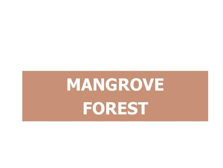 MANGROVE FOREST. OBJECTIVES Describe the distribution of mangroves. Describe climatic features of MG areas. Describe & explain the features of MG. Describe.