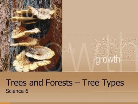 Trees and Forests – Tree Types Science 6. Tree Types There are many thousands of different kinds of trees but all true trees are separated into two (2)