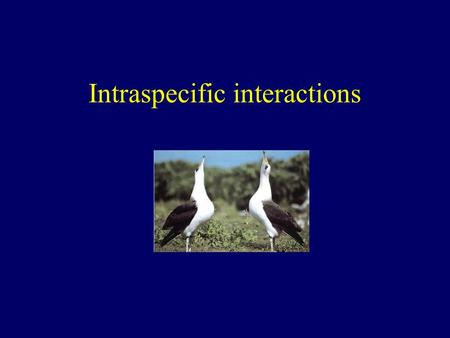 Intraspecific interactions. Intra and interspecific interactions between animals Intraspecific interactions - between members of the same species Interspecific.