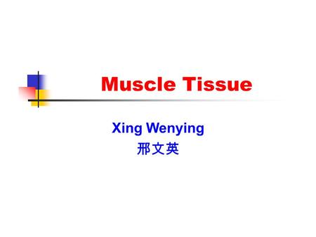 Muscle Tissue Xing Wenying 邢文英. Introduction Components: Muscle cells(muscle fibers) Elongated, thread-like, containing myofilaments and being contractile.