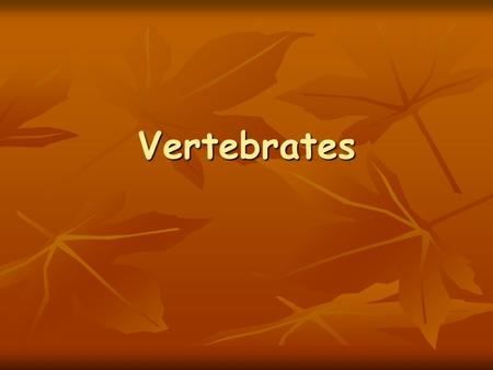 Vertebrates. Vertebrates are: Animals that have backbones.