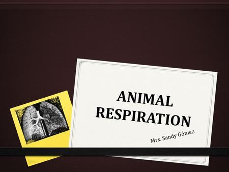 ANIMAL RESPIRATION Mrs. Sandy Gómez. ANIMAL RESPIRATION 0 Functions of the respiratory system: 0 Take in O2 0 Eliminate CO2 0 Eliminate water vapor.