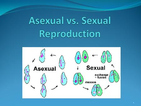 1. 2 Asexual Reproduction Sexual Reproduction Both Types of reproduction in living organisms Pass DNA from parent to offspring.